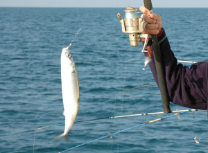 Pêche avec Le Providence